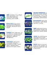 salute piante